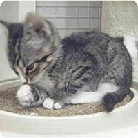 Adopt A Pet :: Little Girl - St. Louis, MO