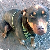 Adopt A Pet :: Duke - Santa Fe, NM