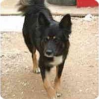 Adopt A Pet :: Marnie - Gilbert, AZ