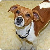 Adopt A Pet :: Mavrik - Racine, WI
