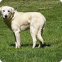 Adopt A Pet :: Grover - Toledo, OH