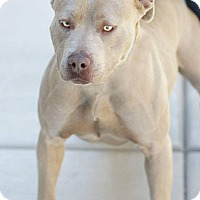 Adopt A Pet :: Brooke - Scottsdale, AZ