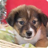 Adopt A Pet :: Cherry - Waldorf, MD