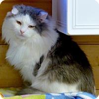 Adopt A Pet :: Potter - Waxhaw, NC