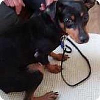 Adopt A Pet :: Mia - Syracuse, NY