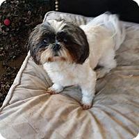 Adopt A Pet :: Sadie - Fort Worth, TX