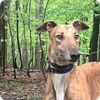 Adopt A Pet :: Pup of Sunshine - Gerrardstown, WV