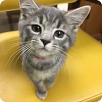 Adopt A Pet :: Mariah - Medina, OH