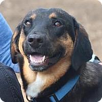 Adopt A Pet :: Reece - Minneapolis, MN
