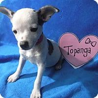 Adopt A Pet :: Topanga - Batesville, AR