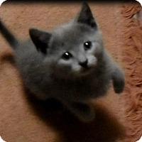 Adopt A Pet :: Smokey - Chicago, IL