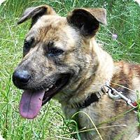 Adopt A Pet :: Sheena - Siren, WI
