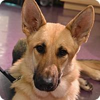 Adopt A Pet :: River - Greensboro, NC