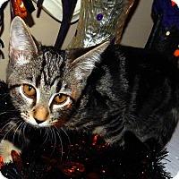 Adopt A Pet :: Thyme - Huntsville, AL