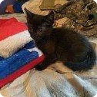 Adopt A Pet :: SHARE BEAR - Hampton, VA