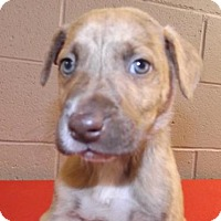 Adopt A Pet :: Woirm - Oxford, MS