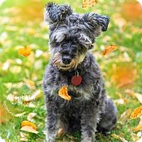 Adopt A Pet :: Annie - Toronto, ON