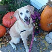 Adopt A Pet :: Maggie - Lowell, MA