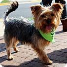 Adopt A Pet :: Billy Dee