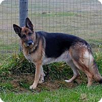 Adopt A Pet :: Asha - Hamilton, MT
