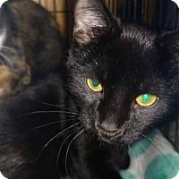 Adopt A Pet :: Zeke - Irwin, PA