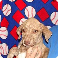 Adopt A Pet :: Vegabond - Oviedo, FL