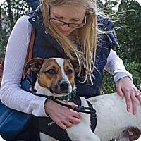 Adopt A Pet :: Zeus - Conyers, GA