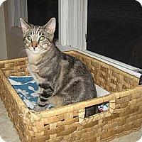 Adopt A Pet :: FRANKIE - 2012 - Hamilton, NJ