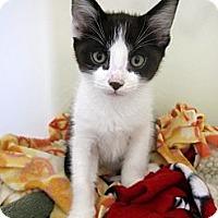 Adopt A Pet :: Scooby - Lafayette, CA