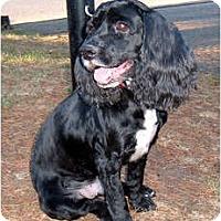Adopt A Pet :: Tucker2 - Tacoma, WA