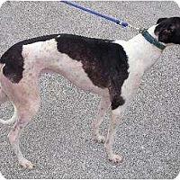 Adopt A Pet :: Gary - Vidor, TX