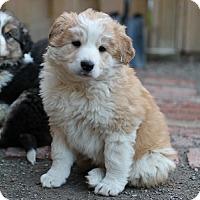 Adopt A Pet :: Anthony - Hamilton, ON