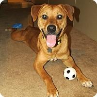 Adopt A Pet :: Daphy - Metairie, LA