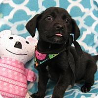 Adopt A Pet :: Ina - Groton, MA