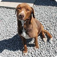 Adopt A Pet :: Donovan - Rochester, NY