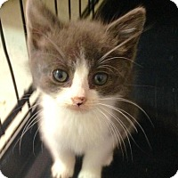 Adopt A Pet :: Chloe - River Edge, NJ