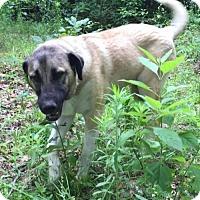 Adopt A Pet :: ARKANSAS, LITTLE ROCK; 'BUDDY' - Little, Rock, AR