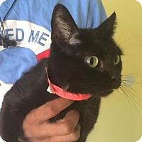 Adopt A Pet :: beauty - Philadelphia, PA