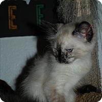 Adopt A Pet :: Leia - Ogden, UT