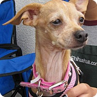 Adopt A Pet :: Nyla - San Diego, CA