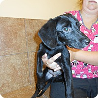 Adopt A Pet :: Bennett *Petsmart GB* - Appleton, WI