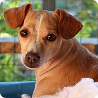 Adopt A Pet :: Jemma - Burbank, OH