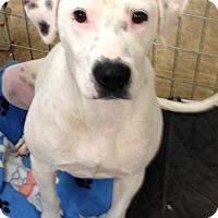 Adopt A Pet :: Sela - Boca Raton, FL