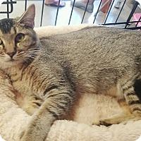 Adopt A Pet :: Sahara - Cerritos, CA