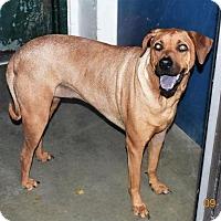 Adopt A Pet :: Jazzie - San Jacinto, CA
