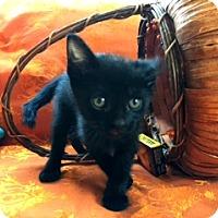 Adopt A Pet :: Barney the Explorer - Los Angeles, CA