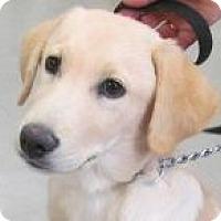Adopt A Pet :: Riley - Silver City, NM