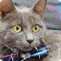 Domestic Shorthair Cat for adoption in Bucyrus, Ohio - Ali Cat