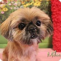 Adopt A Pet :: Mikey - Benton, LA