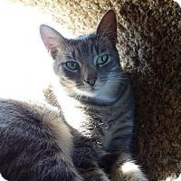 Adopt A Pet :: Kelvin - Waller, TX